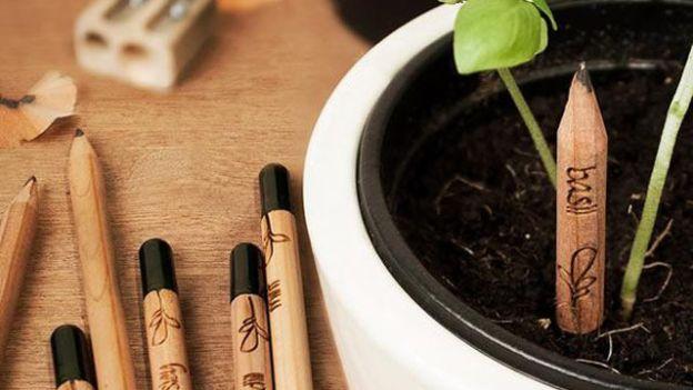 2. Matita Sprout